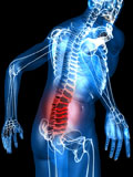 Anatomi-rygg